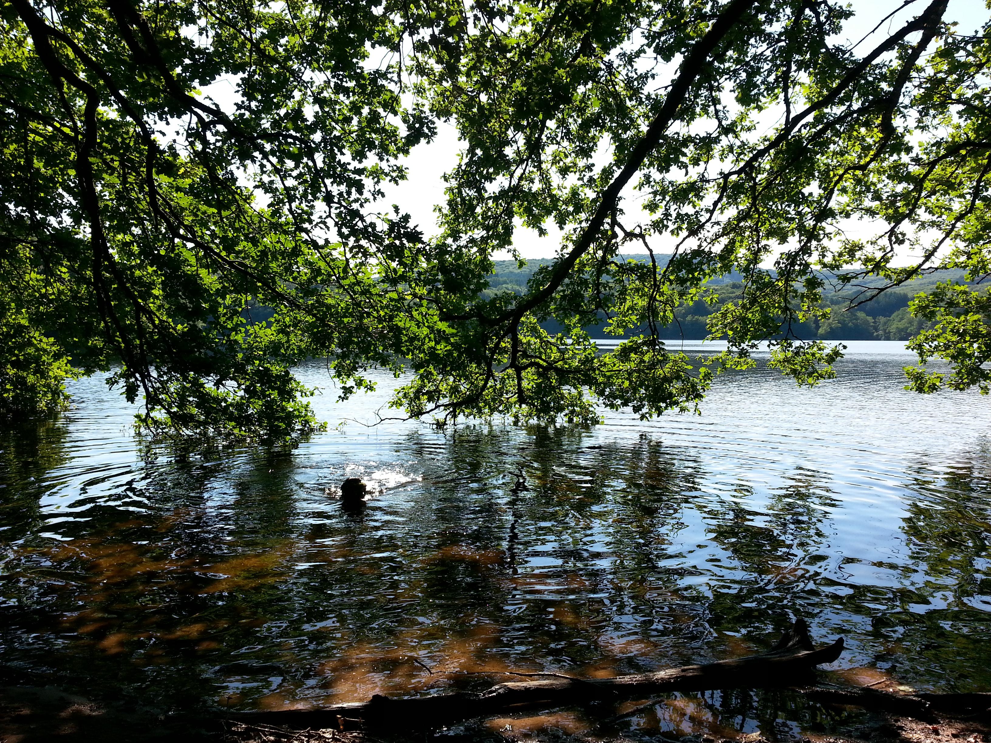 Lac de Chaumecon, paradijs voor mens en dier juni 2015