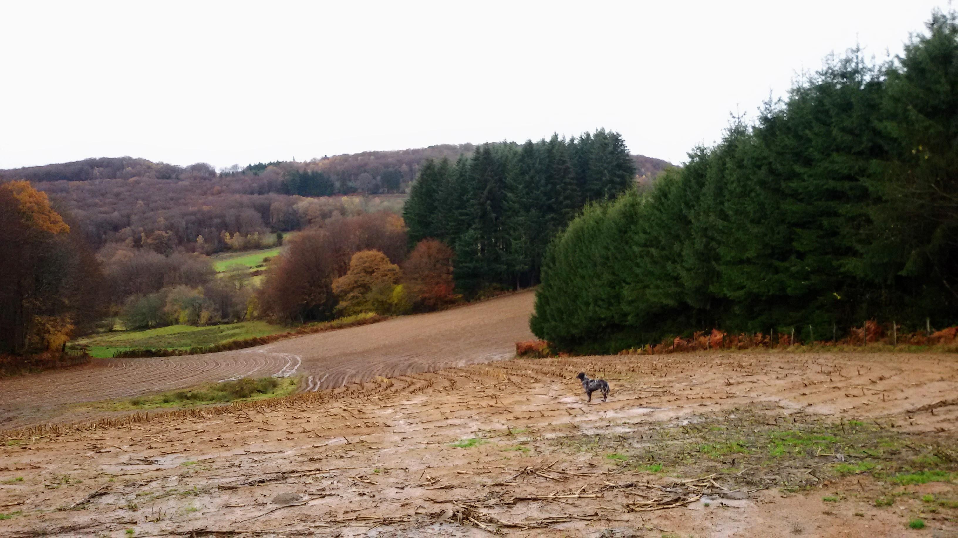 directe omgeving december 2016