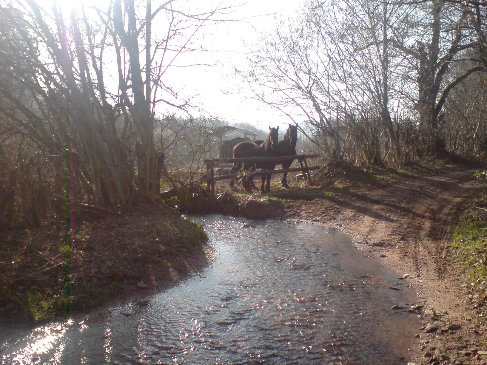 de buurpaarden kom je tegen als je het pad langs ons huis oploopt