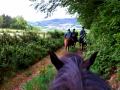 Mooie ritten te paard in de omgeving