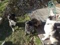 Nout, Gingko, Fifi en Donna